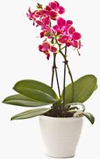 Sens-des-couleurs-de-l'orchidee