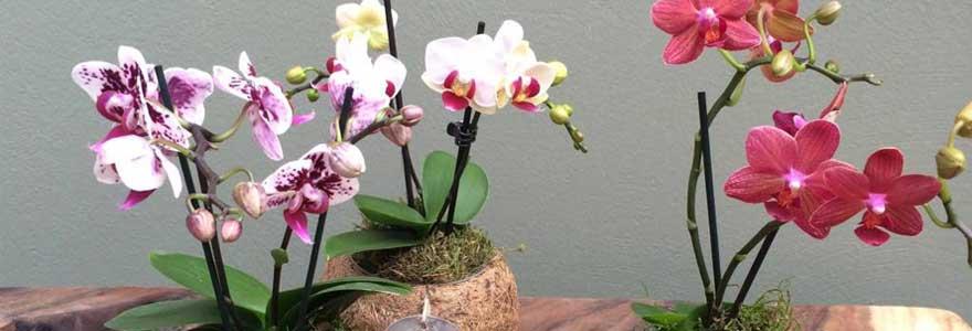 orchidées à prix pas cher