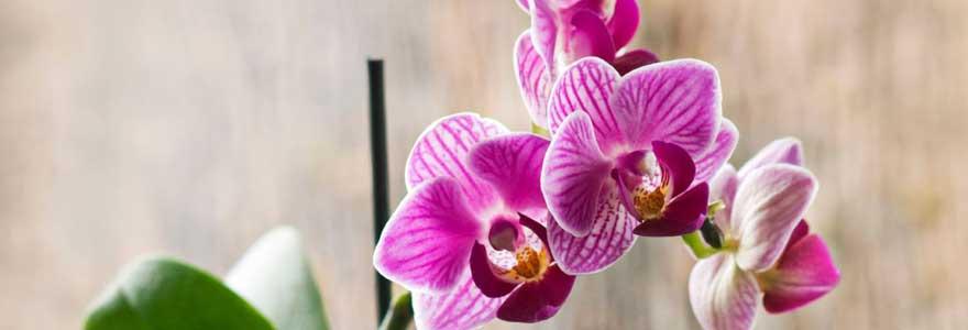 entrenir une orchidée