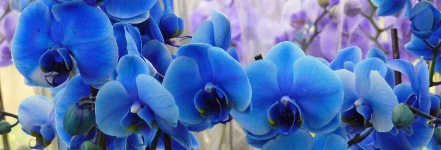tailler les orchidées