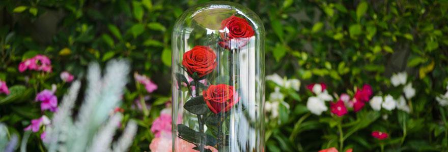 tout savoir sur les roses et les orchid es. Black Bedroom Furniture Sets. Home Design Ideas