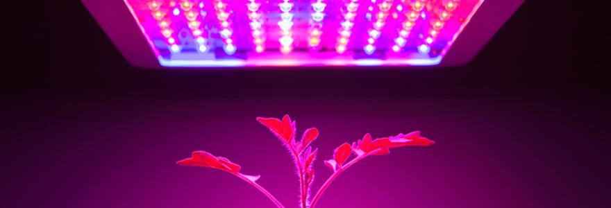 lampes Leds horticoles
